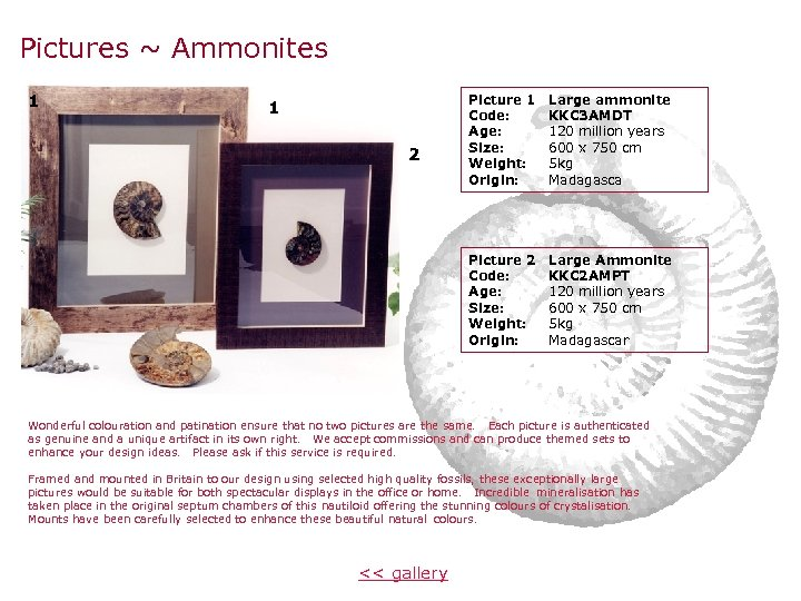 Pictures ~ Ammonites 1 2 Picture 1 Code: Age: Size: Weight: Origin: Large ammonite