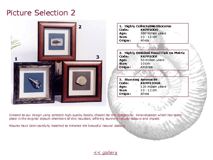 Picture Selection 2 2 1 1. Highly Collectable Orthoceras Code: KKPP 2000 Age: 360