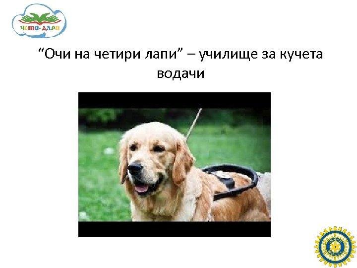 """""""Очи на четири лапи"""" – училище за кучета водачи"""