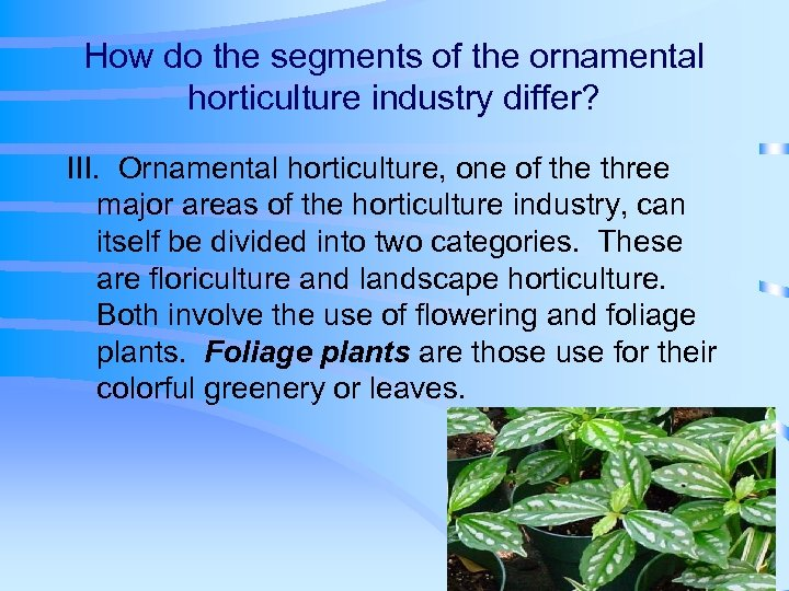 How do the segments of the ornamental horticulture industry differ? III. Ornamental horticulture, one