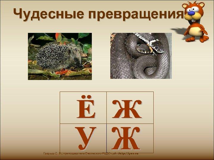 Чудесные превращения Гаврыш С. В. , преподаватель Смолеского РЦДО сайт: http: //g-sv. ru