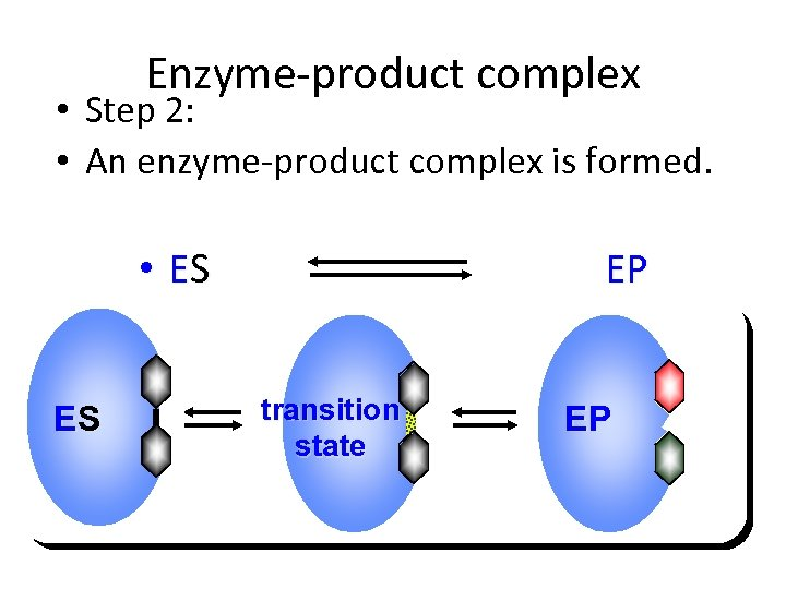 Enzyme-product complex • Step 2: • An enzyme-product complex is formed. • ES ES