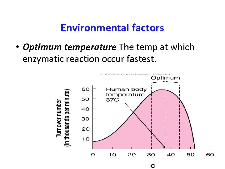 Environmental factors • Optimum temperature The temp at which enzymatic reaction occur fastest.