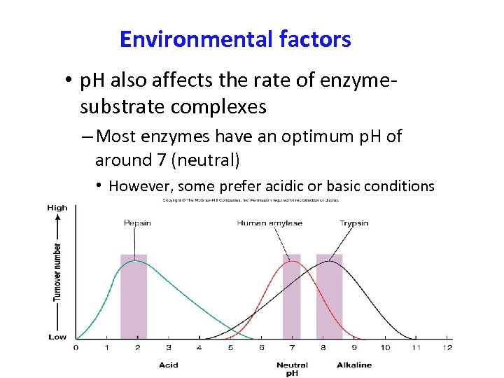 Environmental factors • p. H also affects the rate of enzymesubstrate complexes – Most