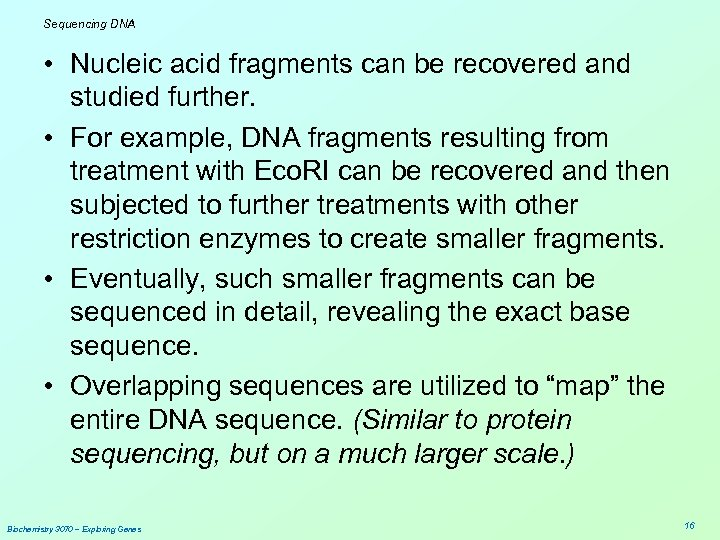 Sequencing DNA • Nucleic acid fragments can be recovered and studied further. • For