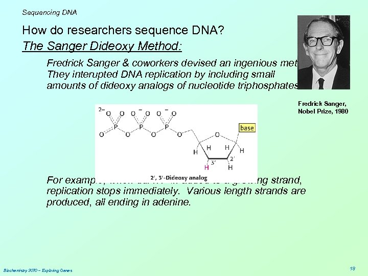 Sequencing DNA How do researchers sequence DNA? The Sanger Dideoxy Method: Fredrick Sanger &