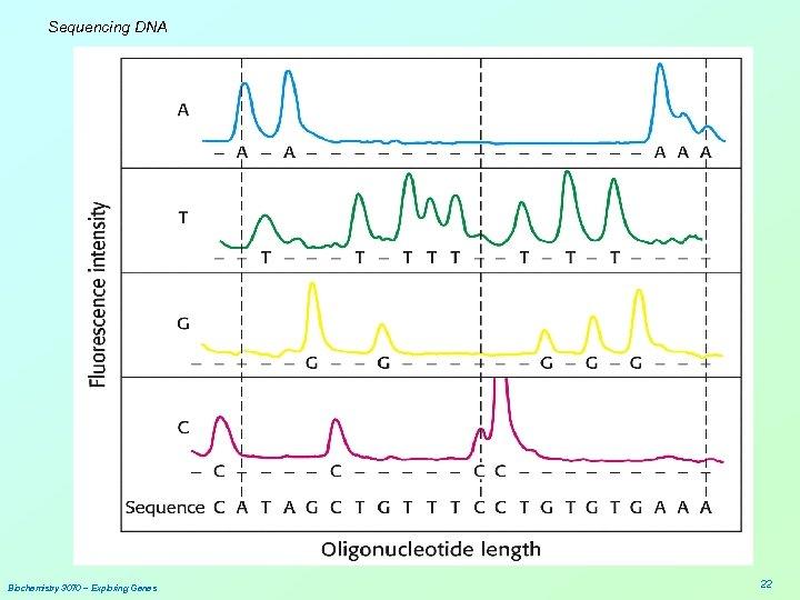 Sequencing DNA Biochemistry 3070 – Exploring Genes 22
