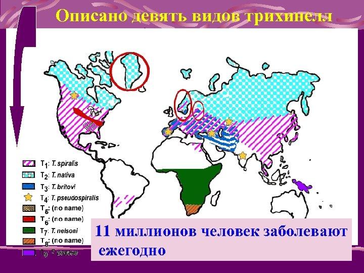 Описано девять видов трихинелл 11 миллионов человек заболевают ежегодно