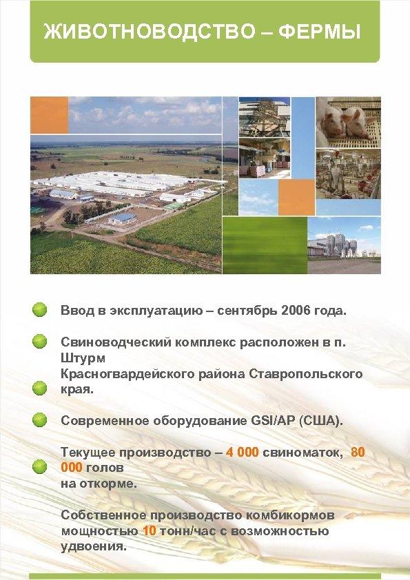 ЖИВОТНОВОДСТВО – ФЕРМЫ Ввод в эксплуатацию – сентябрь 2006 года. Свиноводческий комплекс расположен в