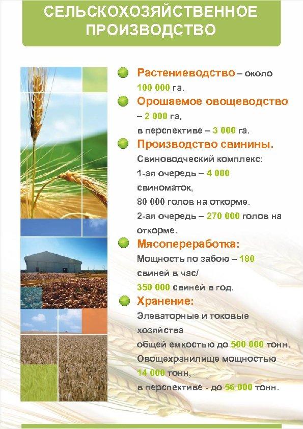 СЕЛЬСКОХОЗЯЙСТВЕННОЕ ПРОИЗВОДСТВО Растениеводство – около 100 000 га. Орошаемое овощеводство – 2 000 га,