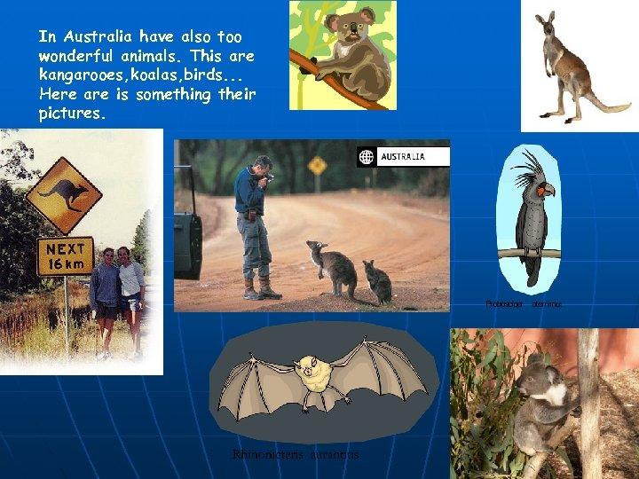 In Australia have also too wonderful animals. This are kangarooes, koalas, birds. . .