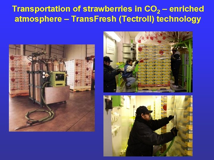 Transportation of strawberries in CO 2 – enriched atmosphere – Trans. Fresh (Tectroll) technology