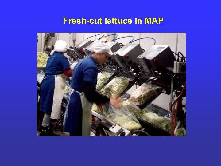 Fresh-cut lettuce in MAP