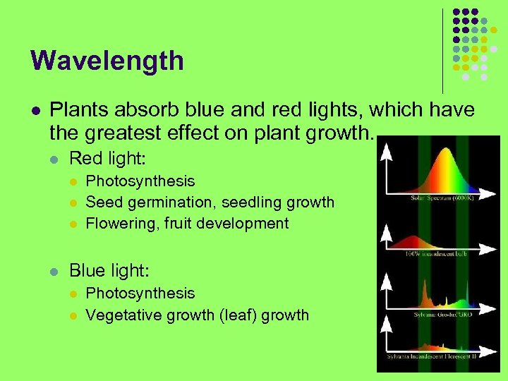 Wavelength l Plants absorb blue and red lights, which have the greatest effect on