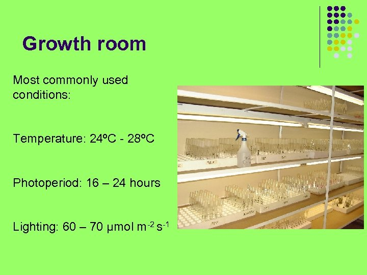 Growth room Most commonly used conditions: Temperature: 24ºC - 28ºC Photoperiod: 16 – 24