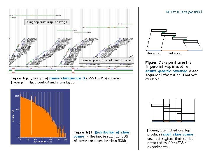 Martin Krzywinski fingerprint map contigs detected genome position of BAC clones Figure top. Excerpt
