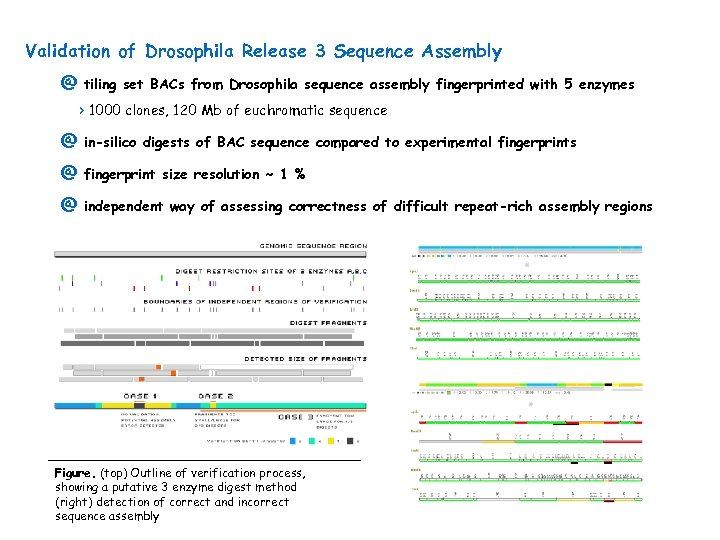 Validation of Drosophila Release 3 Sequence Assembly @ tiling set BACs from Drosophila sequence