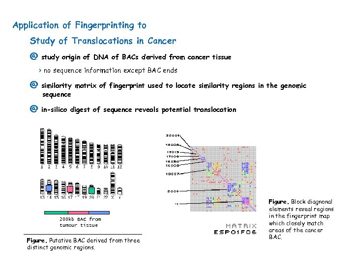 Application of Fingerprinting to Study of Translocations in Cancer @ study origin of DNA