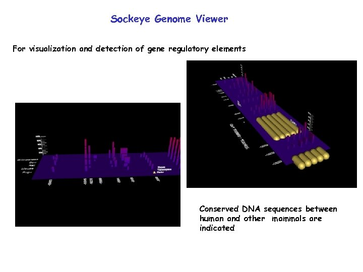 Sockeye Genome Viewer For visualization and detection of gene regulatory elements Conserved DNA sequences