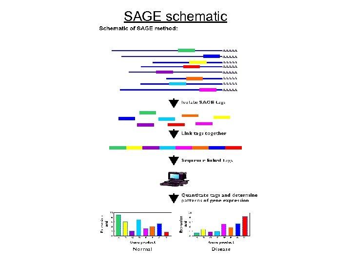 SAGE schematic