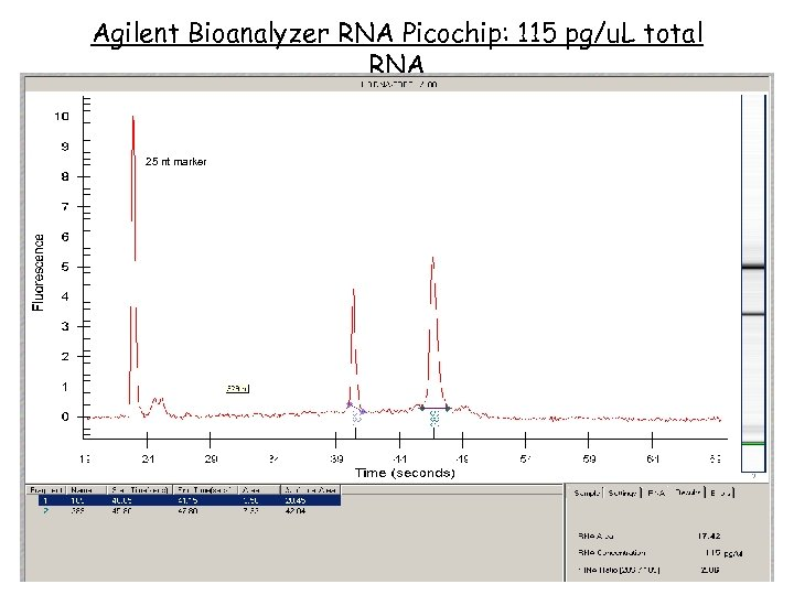 Agilent Bioanalyzer RNA Picochip: 115 pg/u. L total RNA 25 nt marker