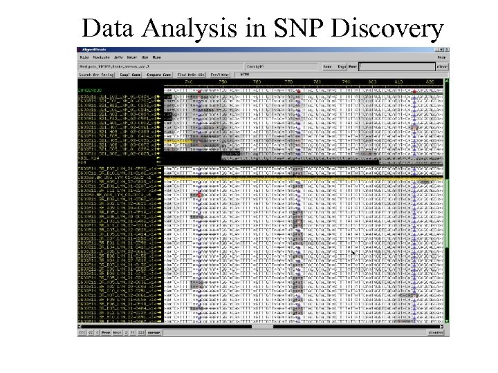 Data Analysis in SNP Discovery
