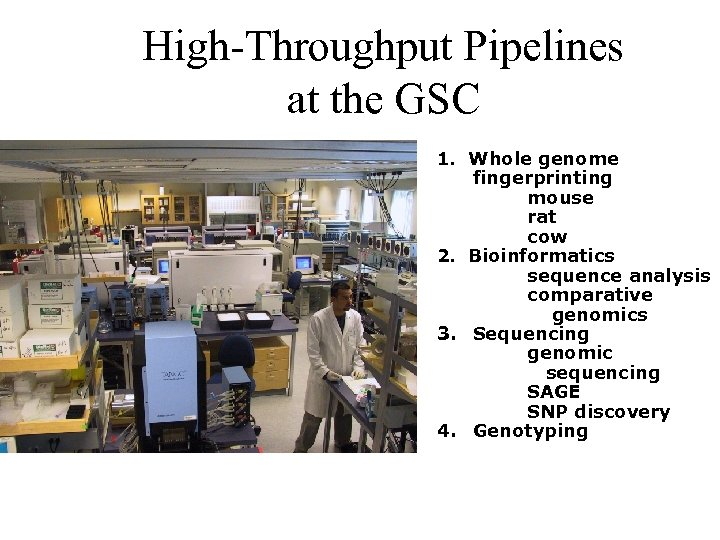 High-Throughput Pipelines at the GSC 1. Whole genome fingerprinting mouse rat cow 2. Bioinformatics