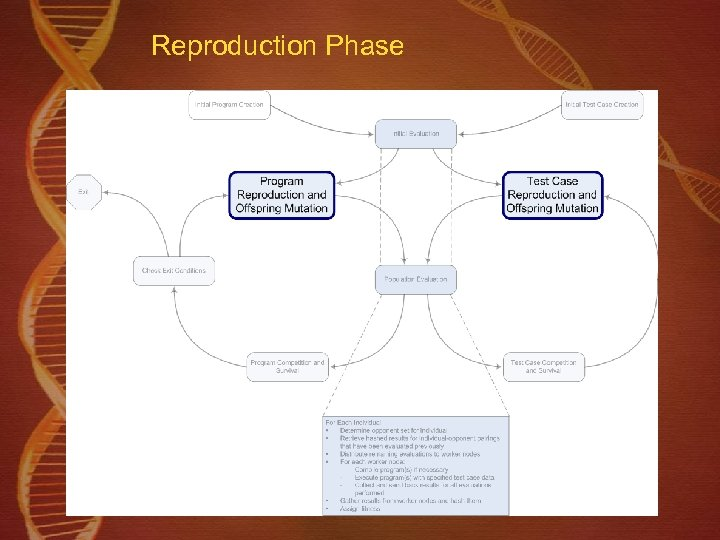 Reproduction Phase
