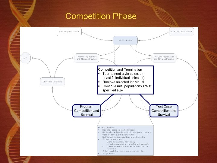 Competition Phase