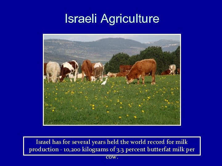 Israeli Agriculture Israel has for several years held the world record for milk production