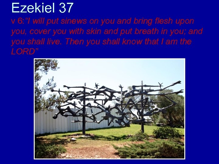 "Ezekiel 37 v 6: ""I will put sinews on you and bring flesh upon"