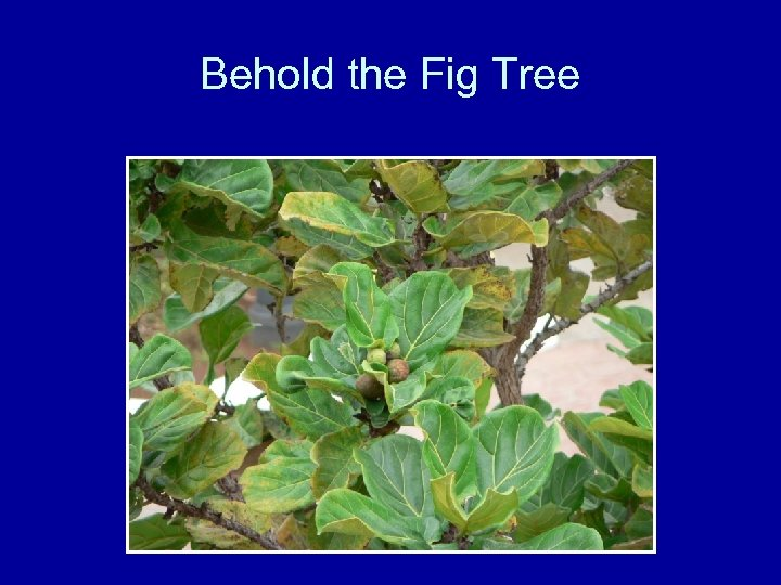 Behold the Fig Tree