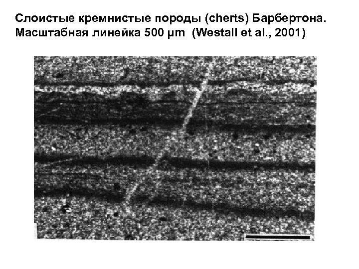 Слоистые кремнистые породы (cherts) Барбертона. Масштабная линейка 500 µm (Westall et al. , 2001)