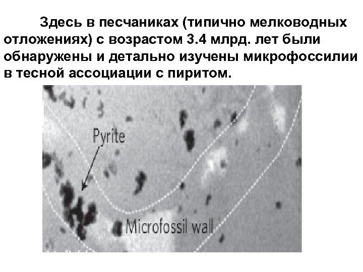 Здесь в песчаниках (типично мелководных отложениях) с возрастом 3. 4 млрд. лет были обнаружены