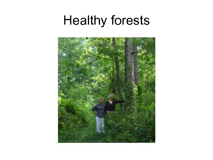 Healthy forests