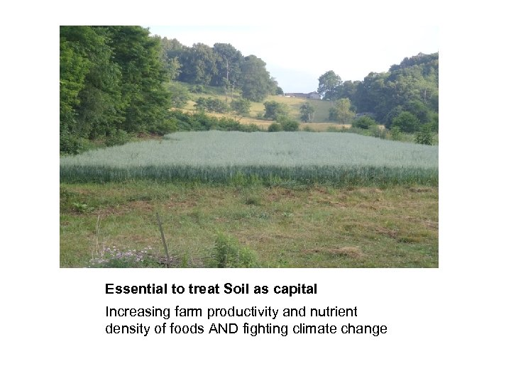 Essential to treat Soil as capital Increasing farm productivity and nutrient density of foods