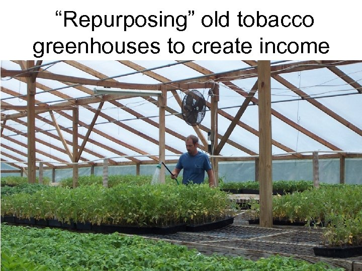 """Repurposing"" old tobacco greenhouses to create income"