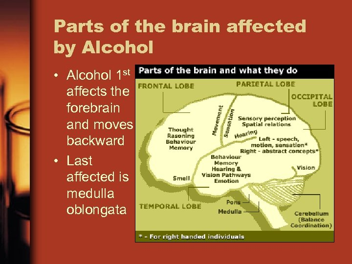 Parts of the brain affected by Alcohol • Alcohol 1 st affects the forebrain