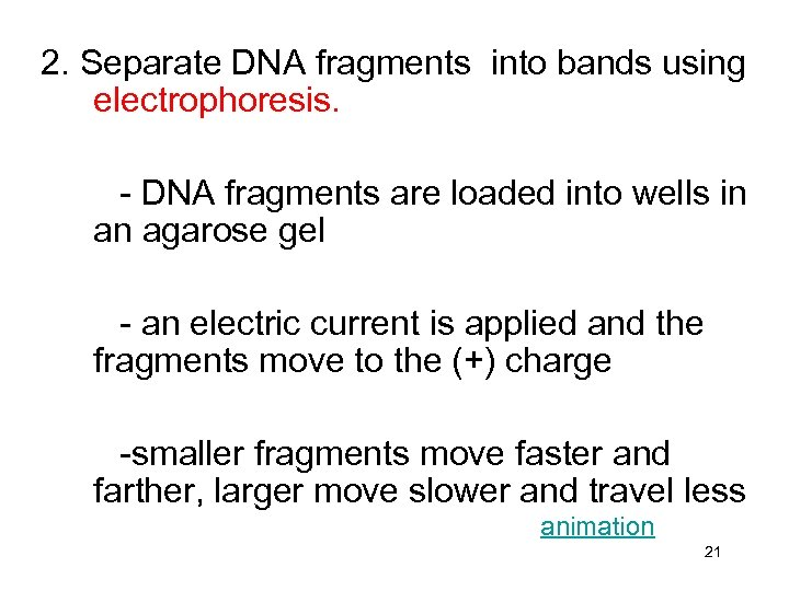2. Separate DNA fragments into bands using electrophoresis. - DNA fragments are loaded into