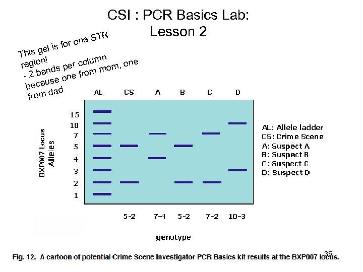 CSI : PCR Basics Lab: Lesson 2 e STR on is for el This