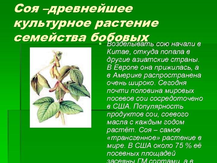 Соя –древнейшее культурное растение семейства бобовых сою начали в § Возделывать Китае, откуда попала