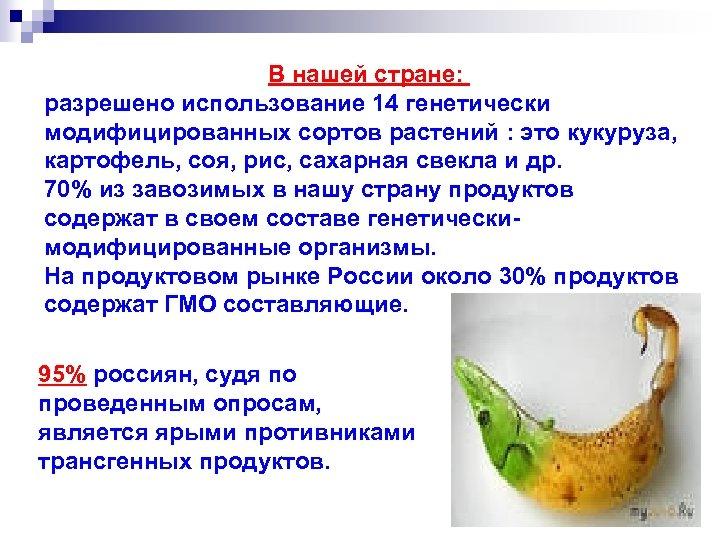 В нашей стране: разрешено использование 14 генетически модифицированных сортов растений : это кукуруза, картофель,
