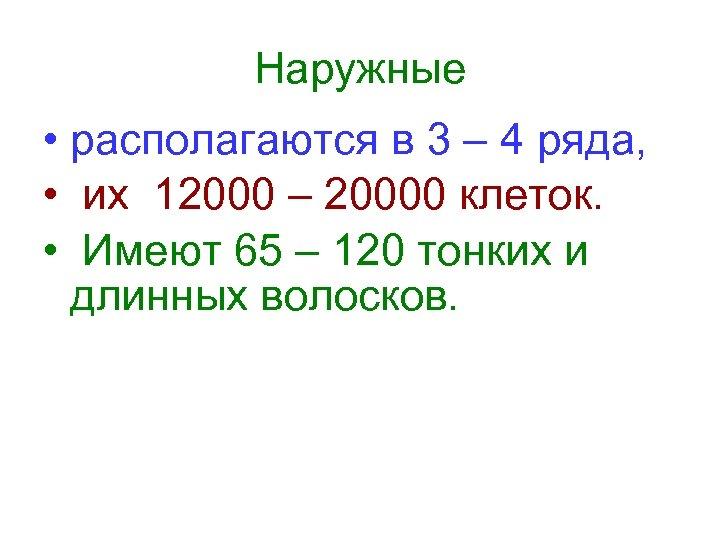 Наружные • располагаются в 3 – 4 ряда, • их 12000 – 20000 клеток.