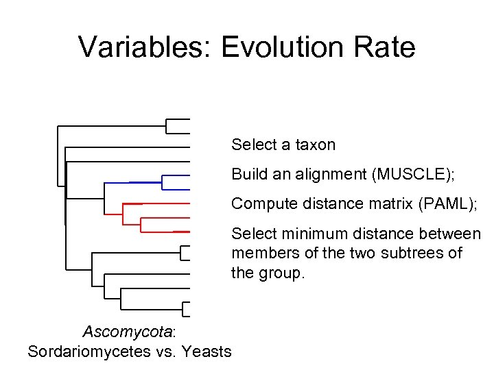 Variables: Evolution Rate Select a taxon Build an alignment (MUSCLE); Compute distance matrix (PAML);
