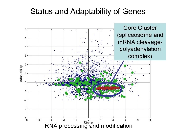 Status and Adaptability of Genes Core Cluster (spliceosome and m. RNA cleavagepolyadenylation complex) RNA