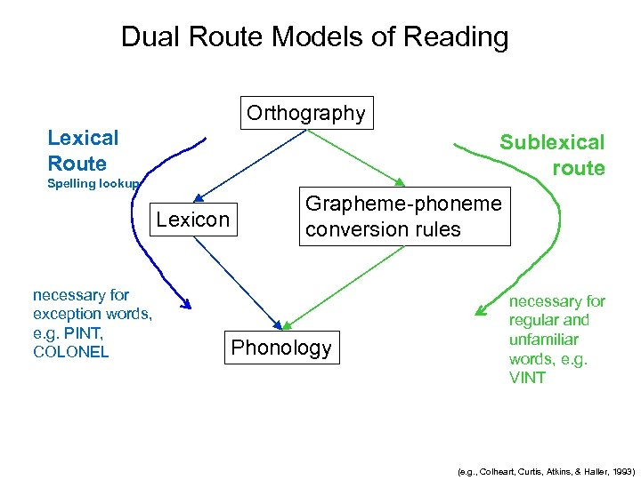 Dual Route Models of Reading Orthography Lexical Route Sublexical route Spelling lookup Lexicon necessary