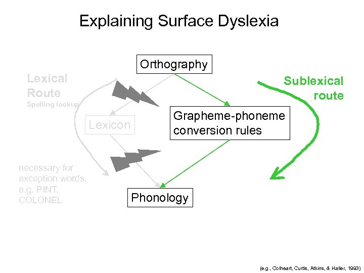 Explaining Surface Dyslexia Orthography Lexical Route Sublexical route Spelling lookup Lexicon necessary for exception
