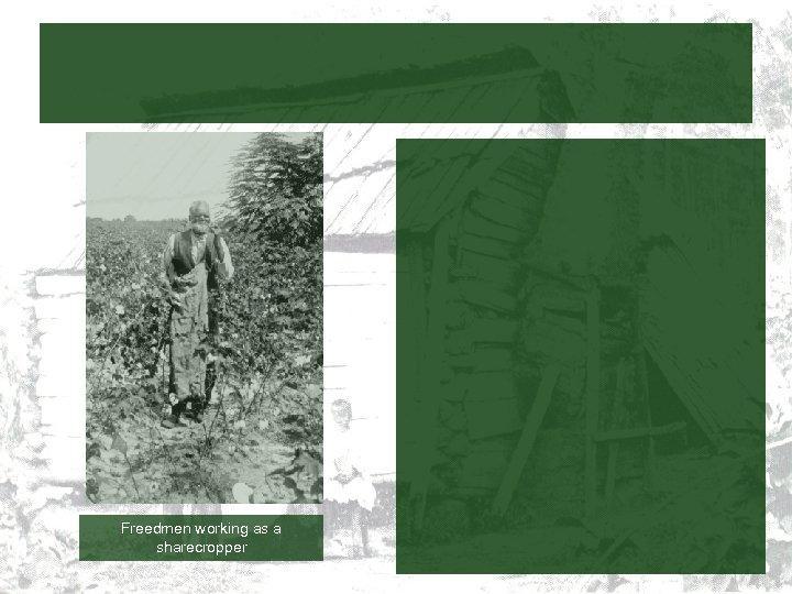 Freedmen working as a sharecropper