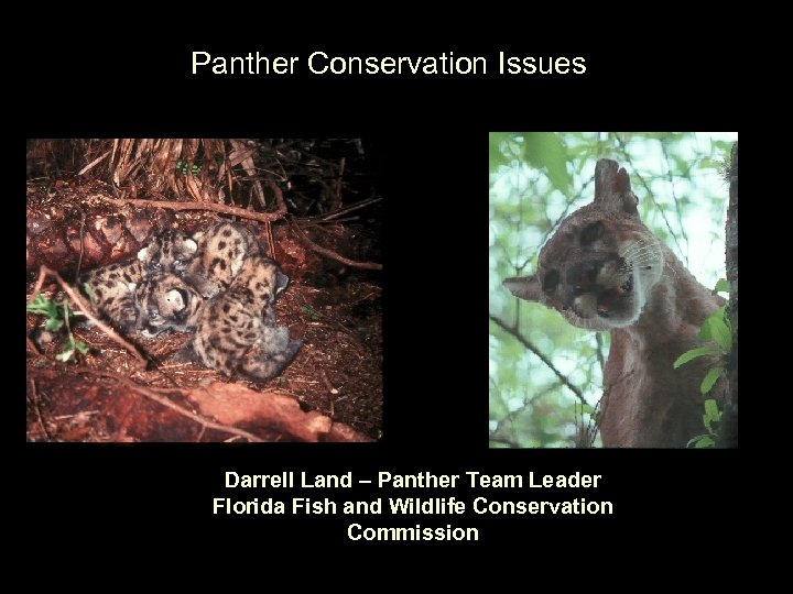 Panther Conservation Issues Darrell Land – Panther Team Leader Florida Fish and Wildlife Conservation