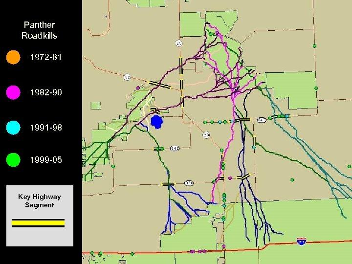 Panther Roadkills 1972 -81 1982 -90 1991 -98 1999 -05 Key Highway Segment